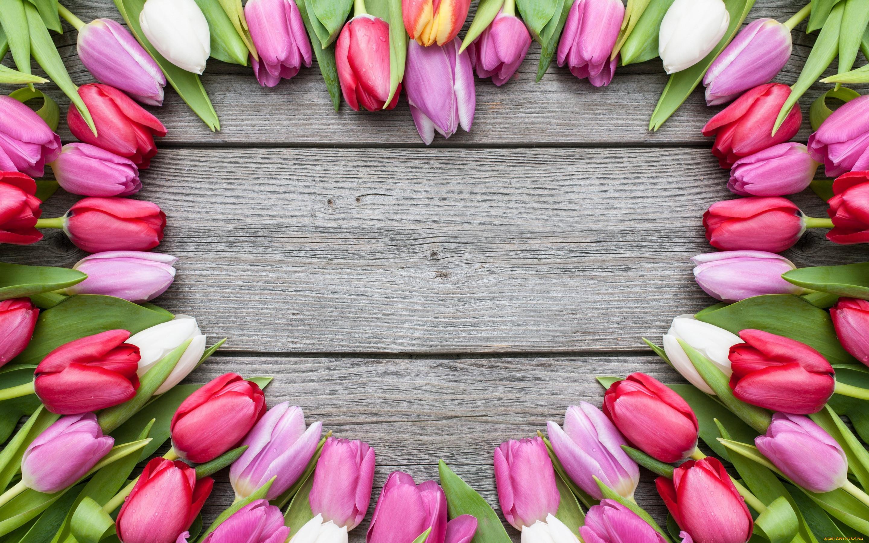 Цветы картинки тюльпаны красивые с надписями любимой